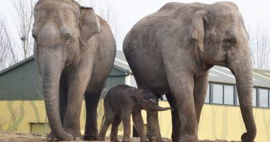 dierenrijk olifanten