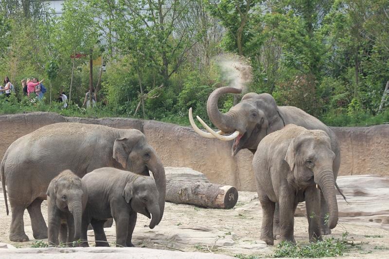 wildlands olifantenkudde