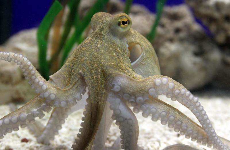 sealife octopus