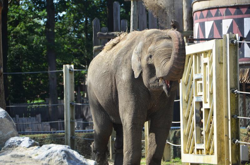 olifant fahim bellewaerde