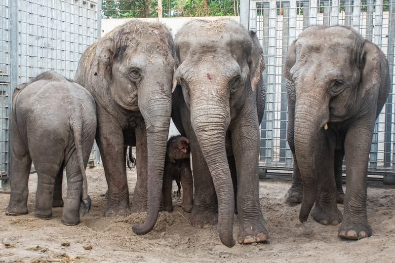 olifantje geboren in wildlands